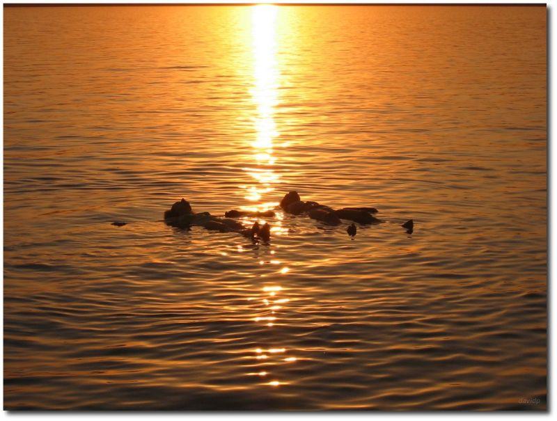 Flotando en el mar muerto al anochecer